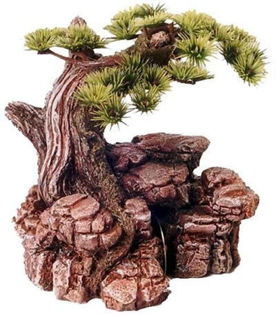 Bonsai boom op rots